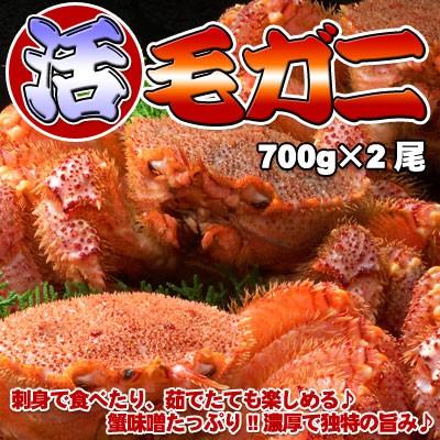 活毛ガニ 超特大サイズ 700g前後×2尾 送料無料 ...
