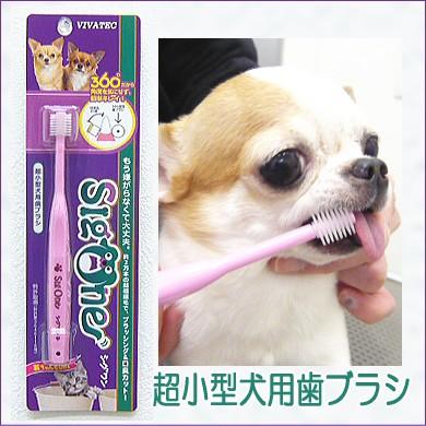 シグワン 超小型犬用歯ブラシ (チワワ 小型犬 デ...