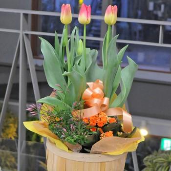 春の寄せ鉢ミックス 【送料無料】 誕生日/お祝/...