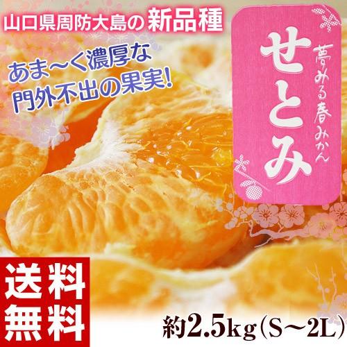 《送料無料》山口県産 せとみ S〜2L 約2.5kg frt ...
