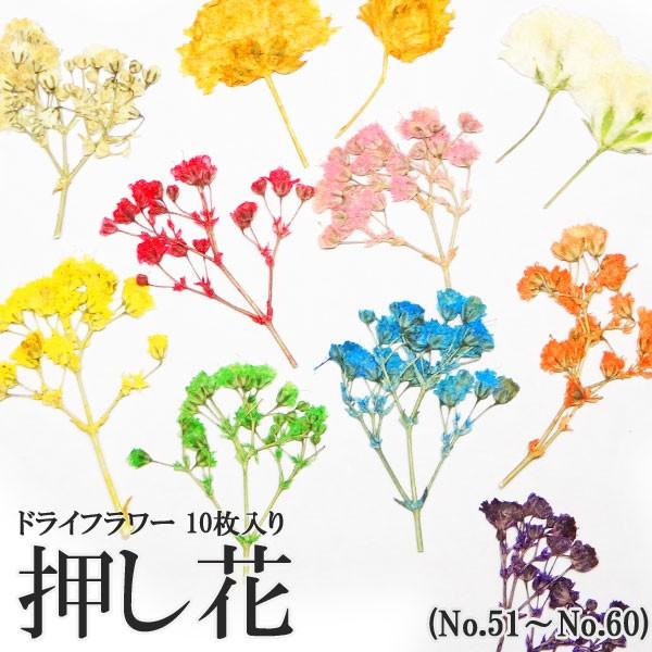 【51-60】押し花(ドライフラワー)10枚入り(ケ...