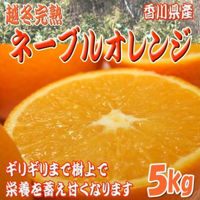 【送料無料】越冬完熟ネーブルオレンジ 5kg(18〜2...