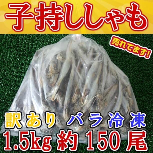 訳あり子持シシャモ(1500g)/SALE/