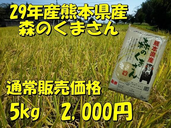 28年産熊本県産森のくまさん【5kg】/精白米/九州