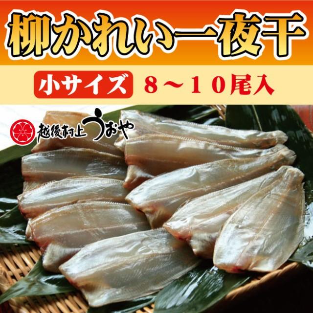 柳がれい一夜干(小サイズ8〜10尾)/干物/おかず