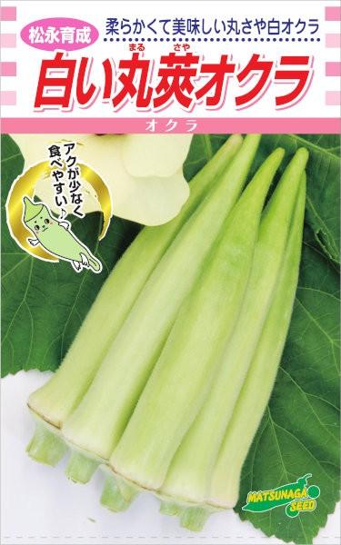 松永種苗 白い丸莢オクラ 約100粒