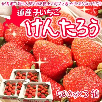 北海道 いちご 送料無料 けんたろう 大粒 イチゴ ...