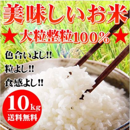 28年産 大粒業務用米10kg【お試し価格/20kg〜でさ...