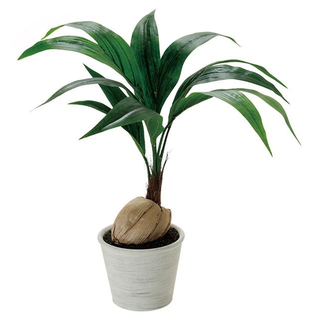 【人工観葉植物】【ココナッツ】【テーブルグリー...