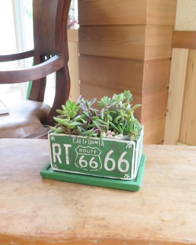 【今、もっとも旬なグリーン界の人気者】多肉植物...