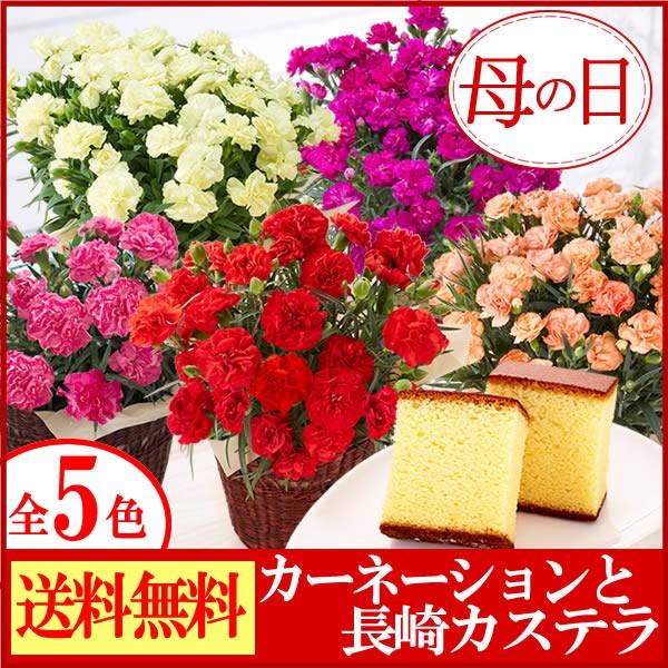 【早割】母の日ギフト カーネーション鉢花4号と長...