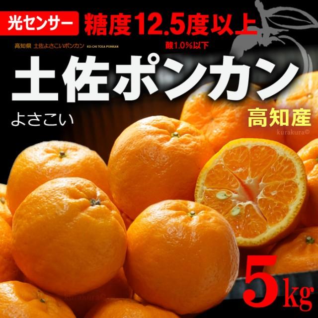 土佐よさこいポンカン 特選(約5kg)高知産 糖度セ...