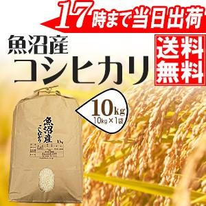 魚沼産コシヒカリ10kg 28年産 送料無料(一部地域...