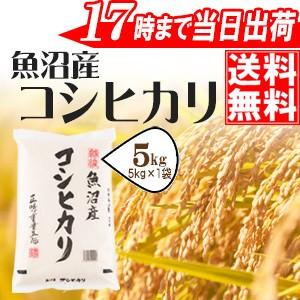 魚沼産コシヒカリ5kg 28年産 ≪高田屋お買い得企...