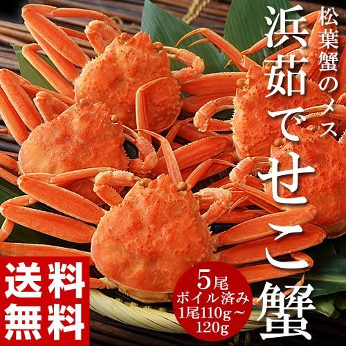 ≪送料無料≫ 兵庫県・香住産 浜茹で『せこ蟹』...