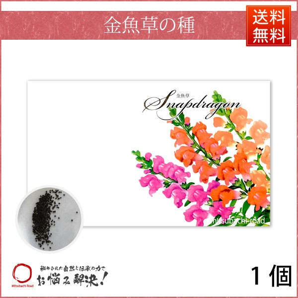 【お手軽 200円】 金魚草の種 (1袋) キンギョソ...