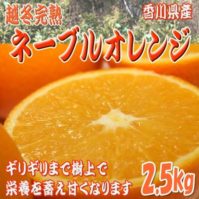 【送料無料】越冬完熟ネーブルオレンジ 2.5kg(9〜...