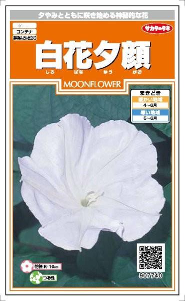 サカタのタネ 白花夕顔 5ml