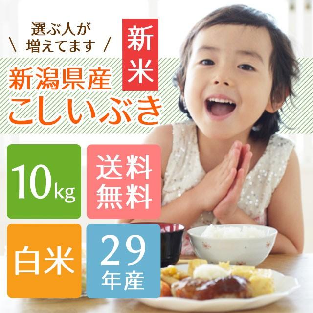 新米 【子供に大人気】新潟県産こしいぶき 白米 1...