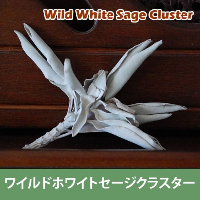 浄化用 ホワイトセージ クラスター20g(浄化用 ...