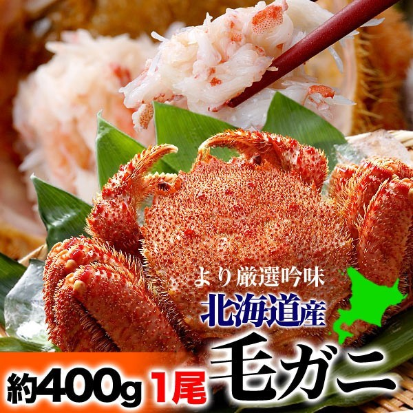大サイズ毛ガニ約400g〜500g前後×1尾【北海道/オ...