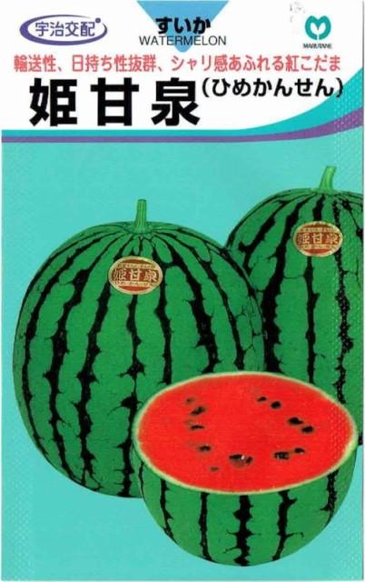 丸種 スイカ 姫甘泉 約8粒【郵送対応】