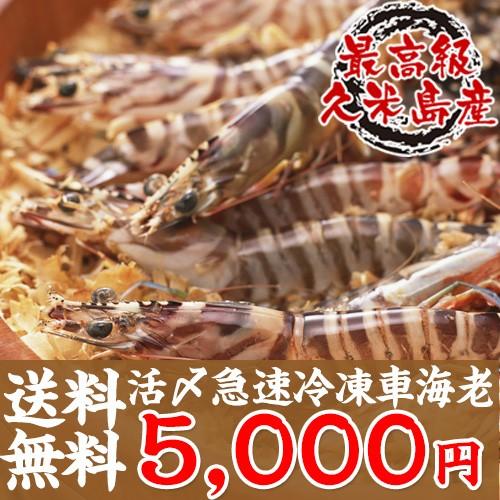 【送料無料】活〆急速冷凍車海老500g お中元や夏...
