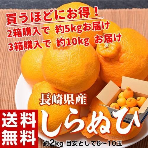 柑橘 長崎県産「デコポンになれなかったしらぬひ...