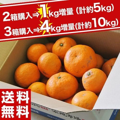 緊急スポット! 【2・3箱購入は増量】訳ありみか...