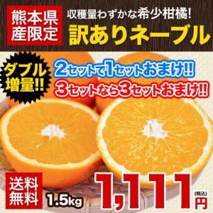 【送料無料】訳ありネーブルオレンジ1.5kg★買え...