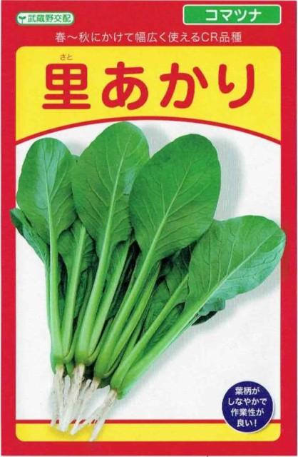 武蔵野種苗園 コマツナ 里あかり 20ml【郵送対...