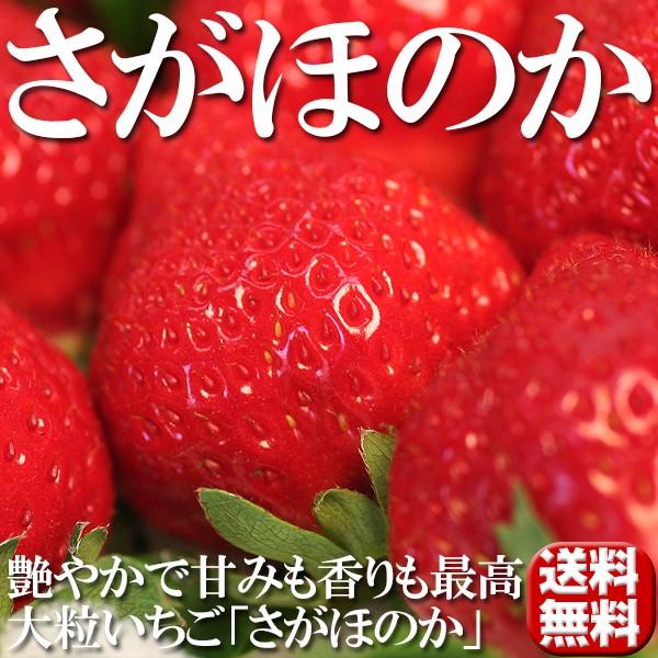 送料無料 フルーツ 苺 大粒いちご さがほのか 2パ...