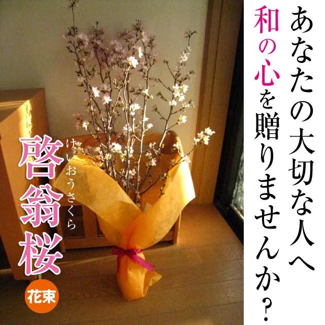 冬に咲く 啓翁桜の花束 奈良県吉野の桜を 自宅...