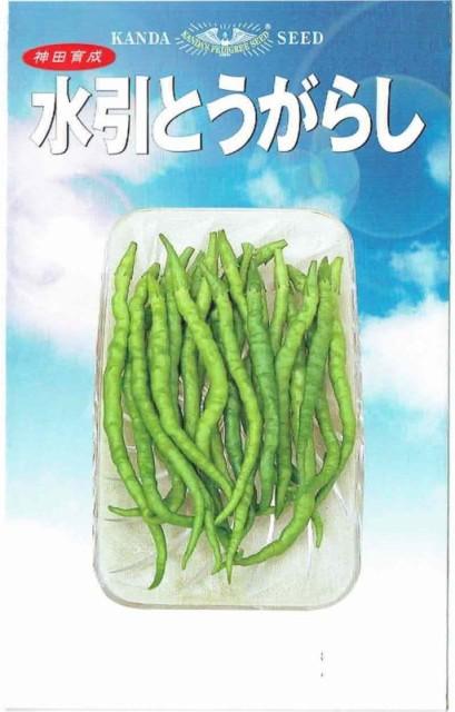 神田育種農場 水引とうがらし 1.3ml【郵送対応...