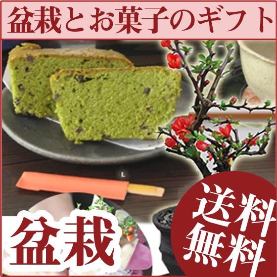 お花の盆栽とお菓子のギフトセット【長寿梅 ミニ...