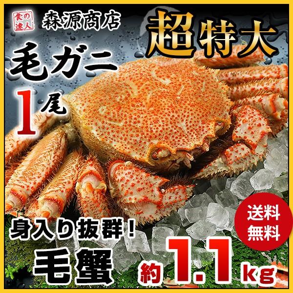 【送料無料】毛ガニ 超特大1尾 約1.1kg ロシア産...