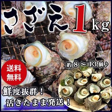 サザエ BBQ用 1kg(8〜13個) さざえ つぼ焼き 中サ...