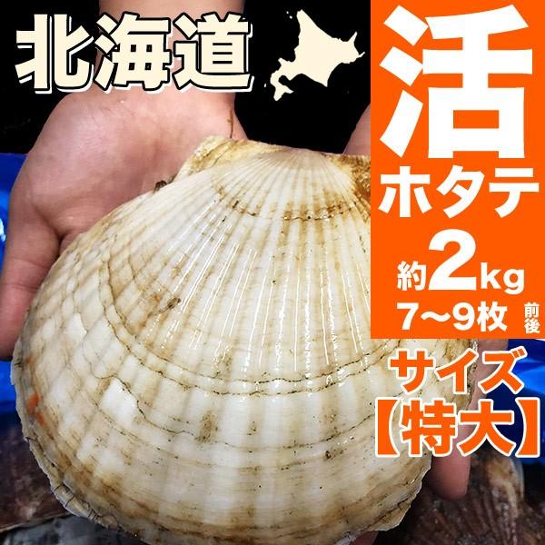 【送料無料】特大サイズ北海道産貝付き活ホタテ約...