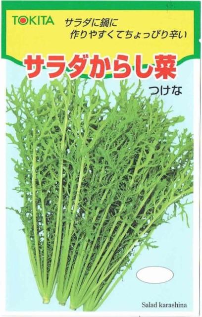 トキタ種苗 サラダからし菜 12ml【郵送対応】