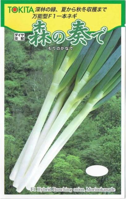 トキタ種苗 ネギ 森の奏で 約5ml【郵送対応】