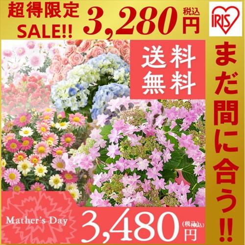 【早割中!】母の日 ギフト アジサイと季節の鉢花...