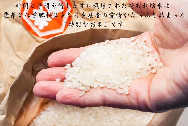 新米29年産 【送料無料】 宮城県登米産 東北194号...