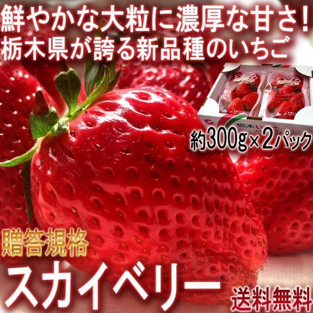 スカイベリー 大粒いちご 約600g 栃木県産 贈答品...