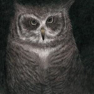 【CD】フクロウの声が聞こえる(完全生産限定盤)/...