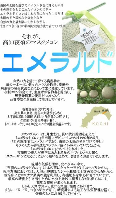 高知県 夜須 マスクメロン エメラルド メロン 1玉
