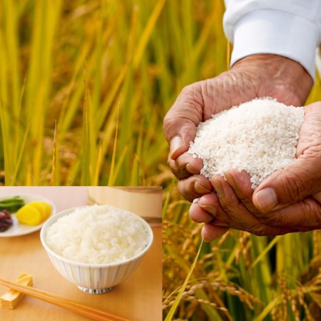 無洗米 プロが選ぶ厳選一等 米 食味ランクA 森のくまさん 10kg 平成29年産 精米 熊本県産