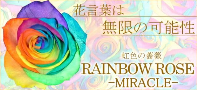 奇跡の薔薇レインボーローズ