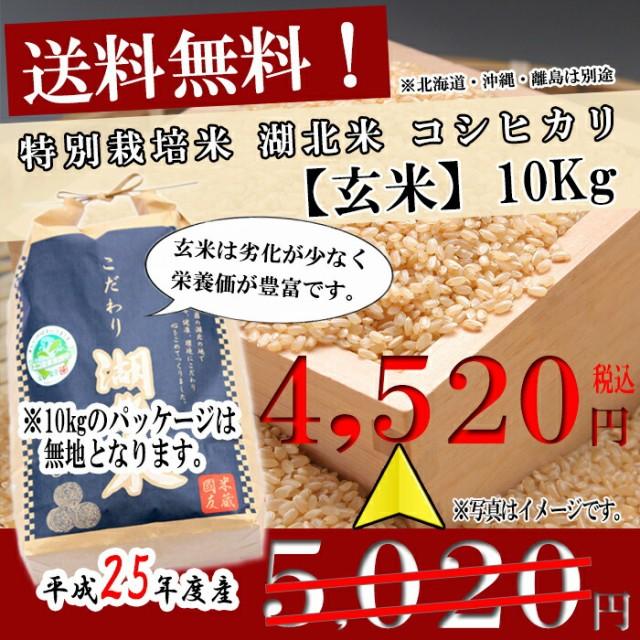 (平成28年度産)湖北米 コシヒカリ【玄米】10kg   特別栽培米