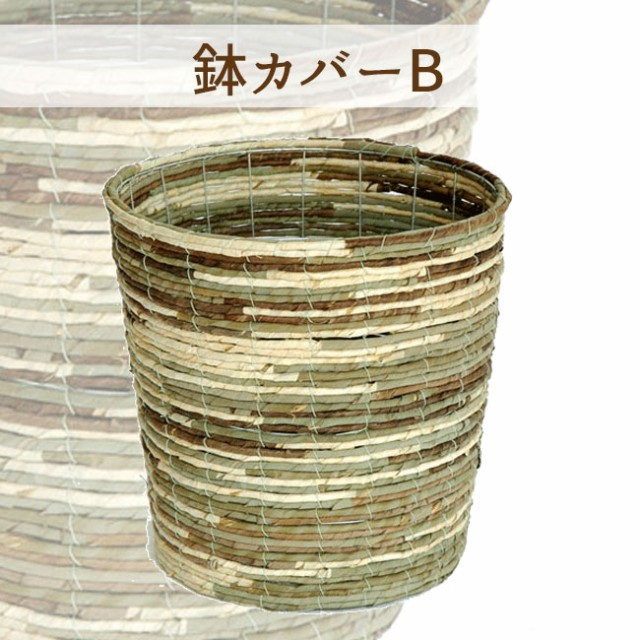 パキラ7号【A級品 自然素材な鉢カバーB♪ 】人気の5本編み仕立て鉢カバー付きでお値打ち♪