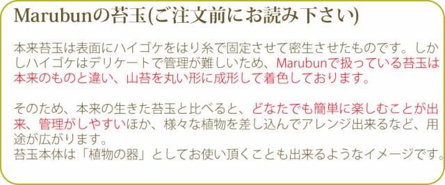 Marubunの苔玉について